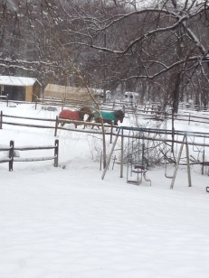 Horses chiling in the snows of 2014 in Leonardo, NJ.