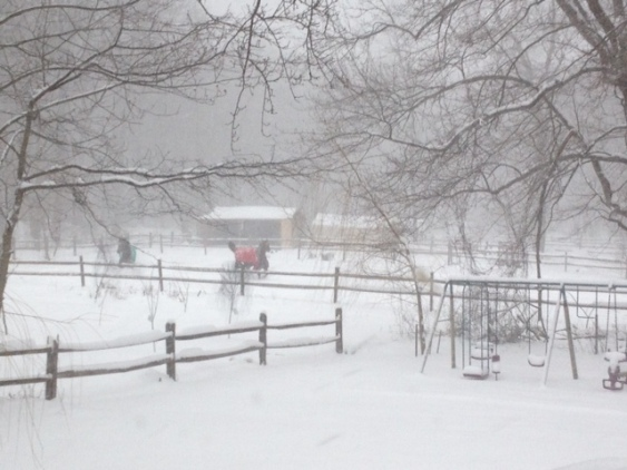 Horses Frolicking in My back Yard